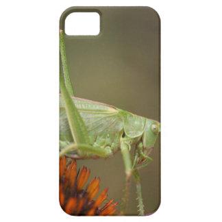 Great Green Bush-Cricket  (Tettigonia viridissima) iPhone SE/5/5s Case