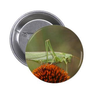 Great Green Bush-Cricket  (Tettigonia viridissima) Pinback Button