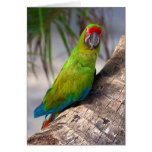 Great green macaw on a tree greeting card