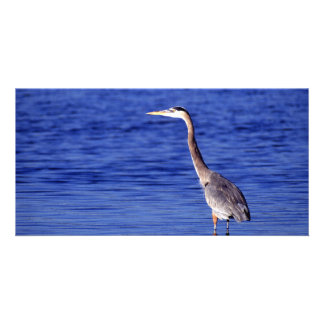 Great Grey Heron Card