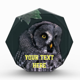 Great Grey Owl Acrylic Award - Customized
