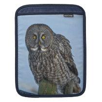 Great Grey Owl and Snow Wildlife Raptor Photo iPad Sleeve