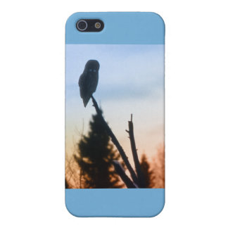 Great Grey Owl at Sunset iPhone 5 Cases