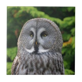 Great Grey Owl Ceramic Tile