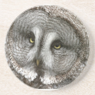 Great Grey Owl Coaster