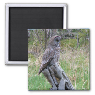 Great Grey Owl in the Wild 2 Inch Square Magnet
