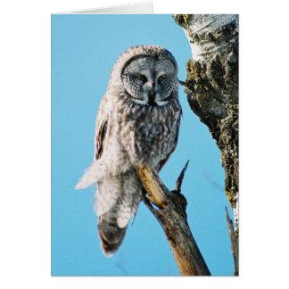 Great Grey Owl in Tree 3 Card