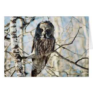 Great Grey Owl in Tree Greeting Card