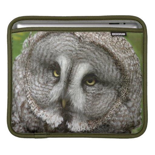 Great Grey Owl iPad Sleeve