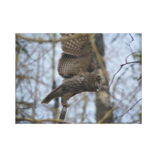 Great Grey Owl Launching in Forest Canvas Print