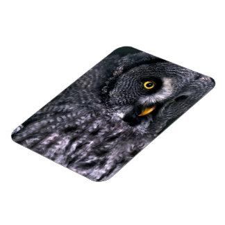 Great Grey Owl Magnet