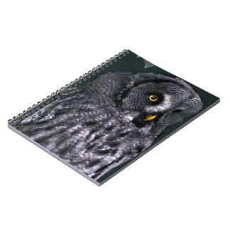 Great Grey Owl Notebook