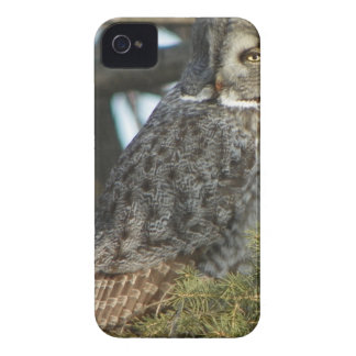 Great Grey Owl Photo Gift Case-Mate iPhone 4 Case