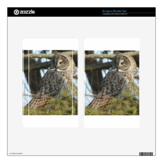 Great Grey Owl Photo Gift Decals For Kindle Fire