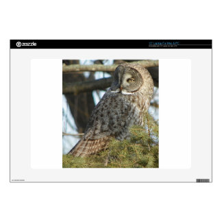 Great Grey Owl Photo Gift Decals For Laptops