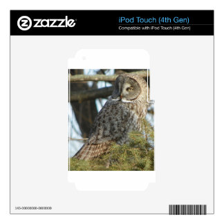 Great Grey Owl Photo Gift iPod Touch 4G Skins