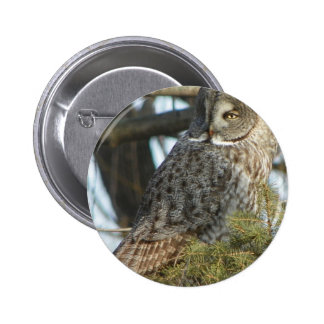 Great Grey Owl Photo Gift Pinback Button