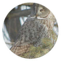 Great Grey Owl Photo Gift Plate