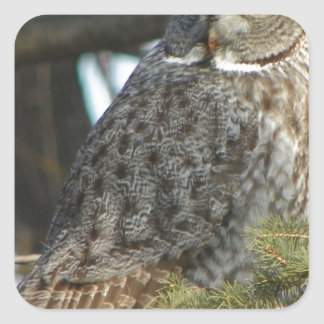 Great Grey Owl Photo Gift Square Sticker