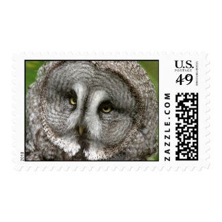 Great Grey Owl Postage Stamp