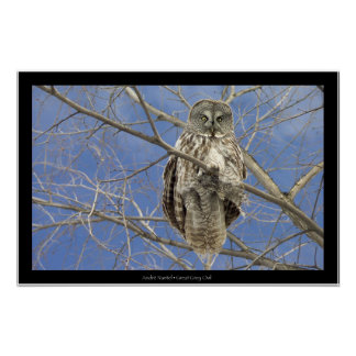 Great Grey Owl Print