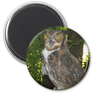 Great horn owl 2 inch round magnet