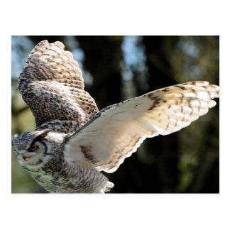 Great Horn Owl Flying 3 Postcard