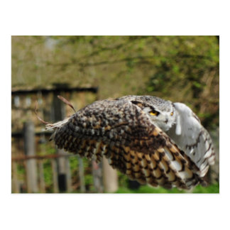Great Horn Owl Flying Postcard