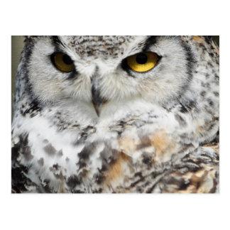 Great Horn Owl looking 2 Postcard