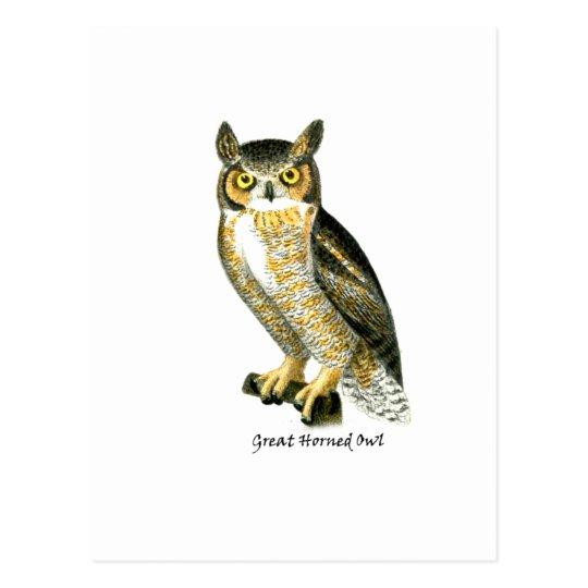 Great Horn Owl Postcard