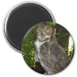 Great horn owl refrigerator magnet