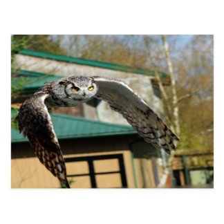 Great Horn Owl Yellow Eyes Postcard