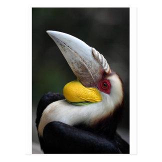 Great hornbill bird portrait postcard