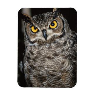Great Horned Owl  2 Rectangular Photo Magnet