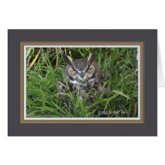 Great horned owl_3054 card