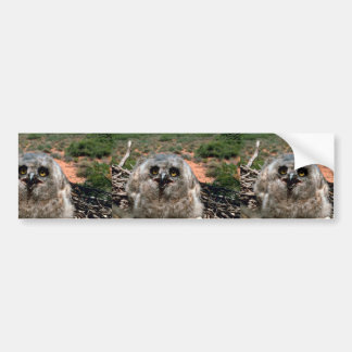 Great Horned Owl (3 weeks) Car Bumper Sticker