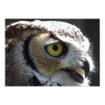 """Great Horned Owl 5"""" X 7"""" Invitation Card"""
