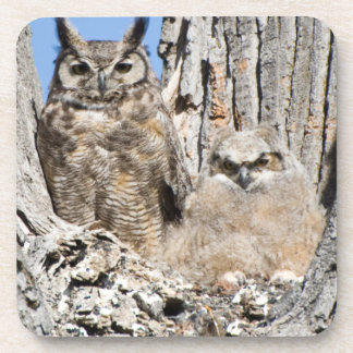 Great Horned Owl and Owlet Beverage Coaster