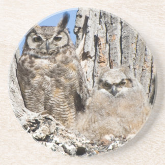 Great Horned Owl and Owlet Sandstone Coaster
