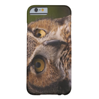 Great Horned Owl, Bubo virginianus Barely There iPhone 6 Case