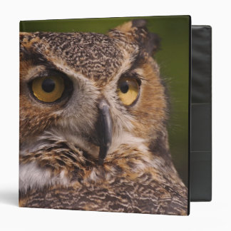 Great Horned Owl, Bubo virginianus Binder