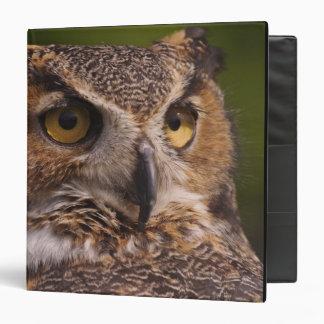 Great Horned Owl, Bubo virginianus Binder