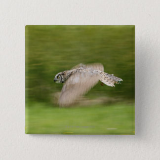 Great Horned Owl (Bubo virginianus) Button