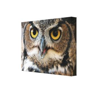 Great Horned Owl (Bubo virginianus) Canvas Print