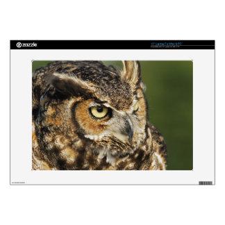 "Great Horned Owl, Bubo virginianus, Captive 15"" Laptop Skins"