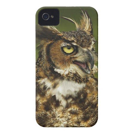Great Horned Owl, Bubo virginianus, Captive 2 Blackberry Bold Case