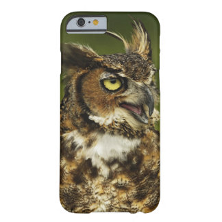 Great Horned Owl, Bubo virginianus, Captive 2 Barely There iPhone 6 Case