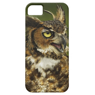 Great Horned Owl, Bubo virginianus, Captive 2 iPhone SE/5/5s Case