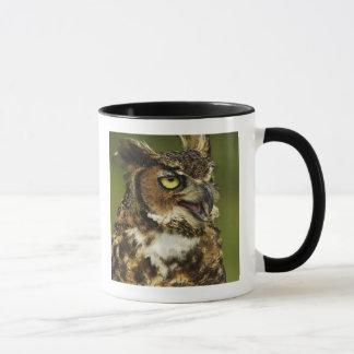 Great Horned Owl, Bubo virginianus, Captive 2 Mug