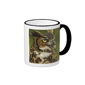 Great Horned Owl, Bubo virginianus, Captive 2 Coffee Mugs